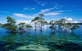 Картинка острова, океан, лагуна, мангры, Andaman and Nicobar islands
