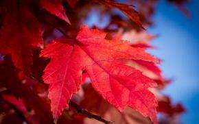 Обои осень, небо, природа, лист, краски, багрянец