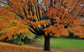 Картинка осень, листья, парк, дерево, сад