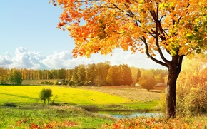 Обои свет, деревья, зелёный, Autumn, луг, листопад, тёплый, солнечный, осень