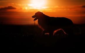 Картинка свет, ночь, собака
