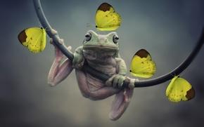 Картинка бабочки, лягушка, Photoshop