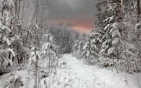 Обои зима, лес, небо, снег, закат