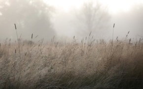 Картинка роса, утро, трава