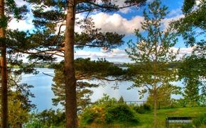 Картинка море, лес, деревья, парк, скамья, норвегия, norway