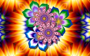 Обои свет, узор, цветок, лепестки