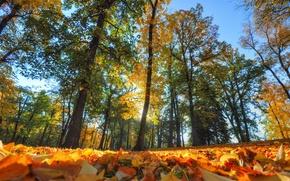 Картинка осень, лес, листья, деревья, парк