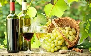 Обои пробка, ветки, вино, красное, листья, штопор, белое, бокалы, бутылки, корзина, виноград