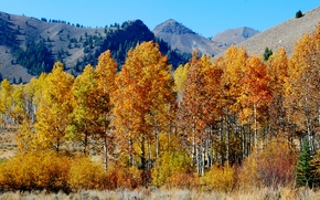 Картинка осень, небо, деревья, горы