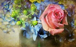 Картинка цветы, ягоды, стена, роза