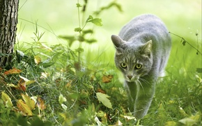 Картинка осень, животные, кошки, природа, охотница, фотообои, сераморда