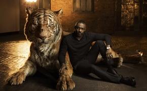 Обои Idris Elba, Идрис Эльба, озвучка, Книга джунглей, Shere Khan, The Jungle Book, актер, тигр