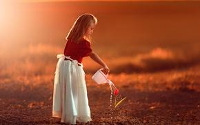 Картинка цветок, закат, тюльпан, девочка, лейка