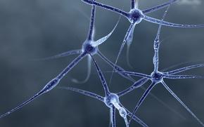 Обои клетки, синий, Нервы