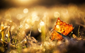 Картинка трава, лист, блики, осенний