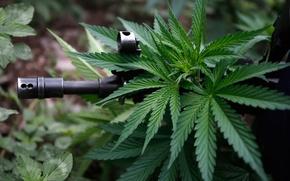 Обои cannabis, ganja, hash, hashish, автомат