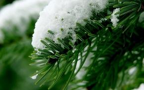 Обои макро, ветка, хвоя, снег, зима, лес