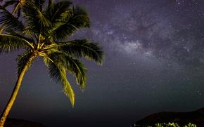 Картинка космос, звезды, ночь, пальма, млечный путь