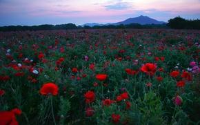 Картинка поле, цветы, ночь