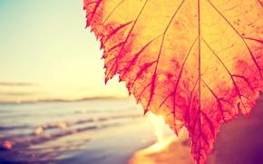 Картинка leaf, солнечный свет, sunshine, море, волны, вода, sunlight, sky, макро, macro, sea, листок, waves, water, …