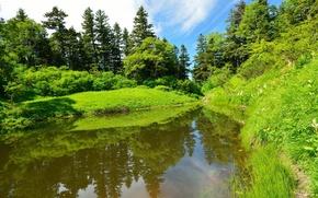 Картинка лес, лето, трава, природа, река, фото