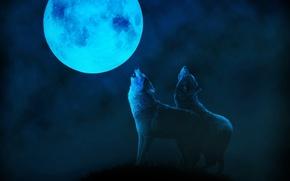 Картинка ночь, туман, луна, волки