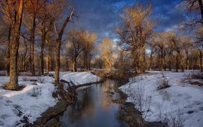 Картинка зима, лес, тучи, река