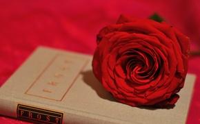 Картинка цветок, стиль, роза, бутон, книга