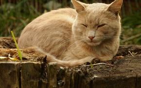 Картинка кошка, парк, на пне