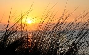 Картинка небо, трава, макро, закат, растение