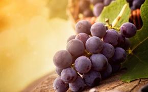 Картинка листья, свет, виноград