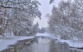 Картинка зима, деревья, природа, река