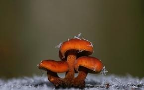 Картинка снежинки, грибы