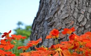 Картинка цветы, дерево, рыжий, клубма