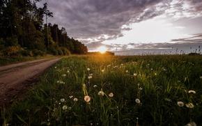 Картинка дорога, поле, свет