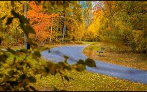 Картинка осень, скамейка, листва, дорожка, листопад, Autumn, leaves, path, fall