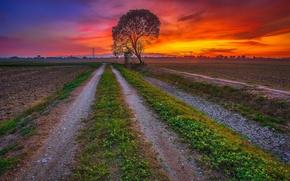Картинка дерево, поле, зарево, дорога, небо, облака, закат