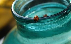 Картинка стекло, голубой, жук