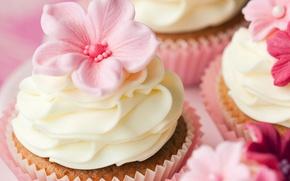 Обои цветы, пирожные, выпечка, десерт, украшения, сладкое, кексы, крем