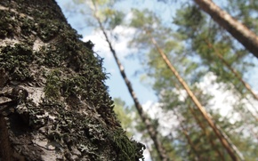 Картинка лес, макро, мох, Дерево, ствол