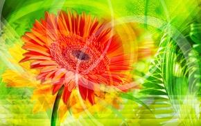 Картинка цветок, оранжевый, обои, листок, стебель