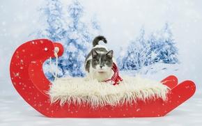 Обои кот, глаза, фотосессия, лесок, новый год, рождество, фон, снег, кошка, красный, шарфик, мех, серая с ...