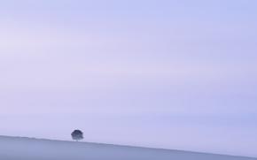 Обои природа, туман, дерево