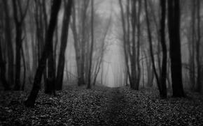 Картинка осень, лес, туман, листва, тропа