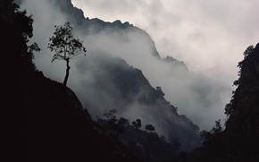Обои горы, туман, Дерево, склон