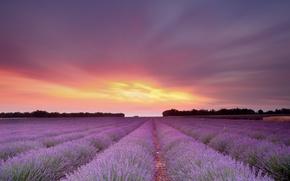 Картинка цветы, поле, солнце, небо, лаванда, закат