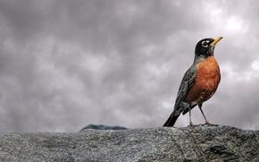 Обои камень, 153, облака, птица