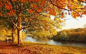 Картинка осень, вода, пейзаж, отражение, листва, мостик, дереья