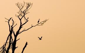 Обои минимализм, птицы, дерево, фон