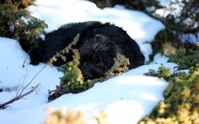 Картинка глаза, снег, природа, собака